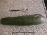 calabacin grande